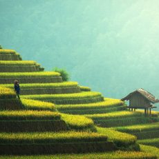 Ontdek het noorden van Bali